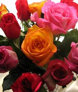 bukiet kolorowych roz